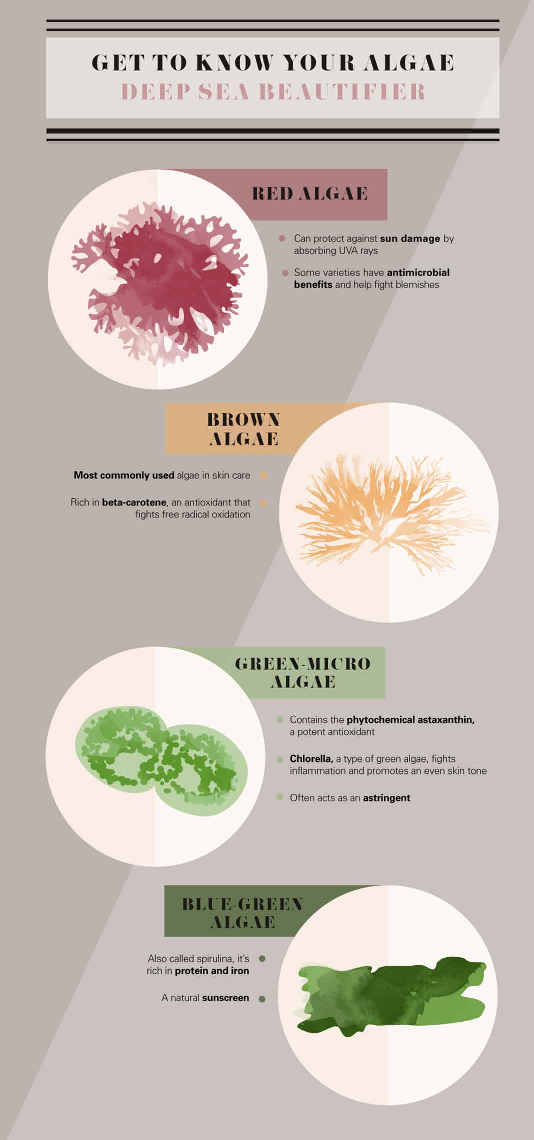 Types of Algae
